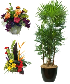 tradeshow florist